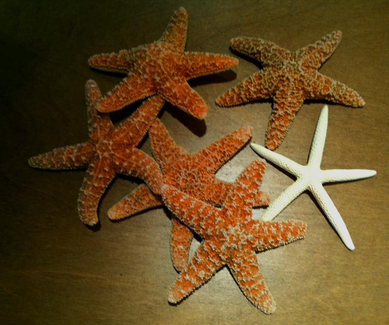 Judd-starfish