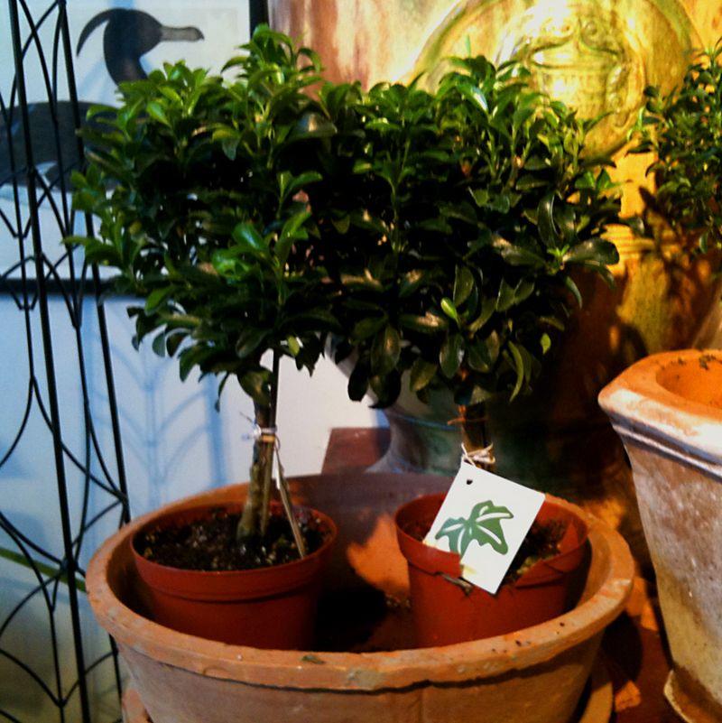 Judd-plants