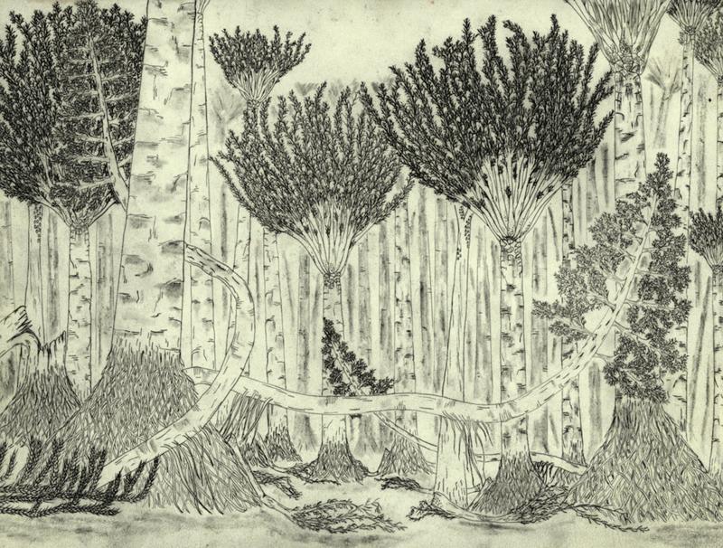 Gilboa forest floor