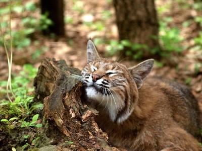 Image from animaltourism.com